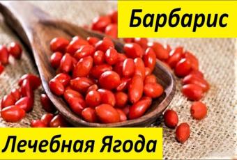 барбарис лечебные свойства