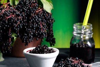Бузина черная – лечебные свойства и противопоказания, применение в народной медицине и гомеопатии
