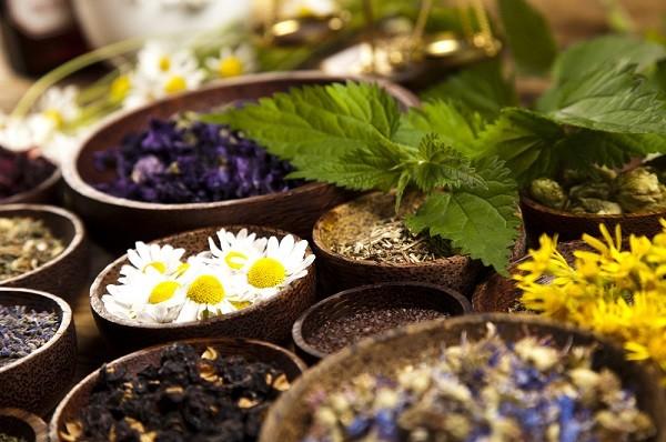 Лекарственные растения для очищения лимфы