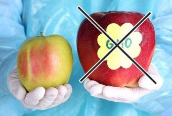 Продукты ГМО — горе или благо?