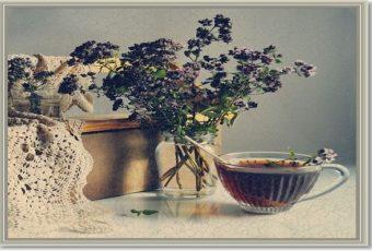 Лечение травой душицей — рецепты народной медицины