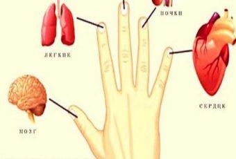 Каждый палец связан с внутренними органами: методы лечения из Японии за 5 минут