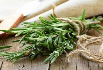 Это растение улучшает память на 75% и предотвращает болезнь Альцгеймера!